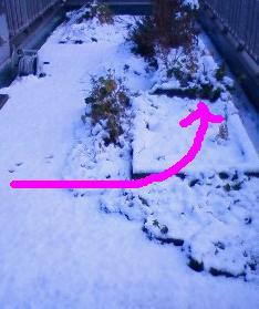 屋上菜園1452201201241448000.jpg
