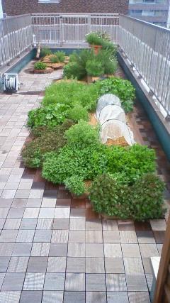 1601201204181048000屋上菜園.jpg